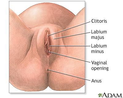 porno-roliki-s-ginekologiya-instrumenti